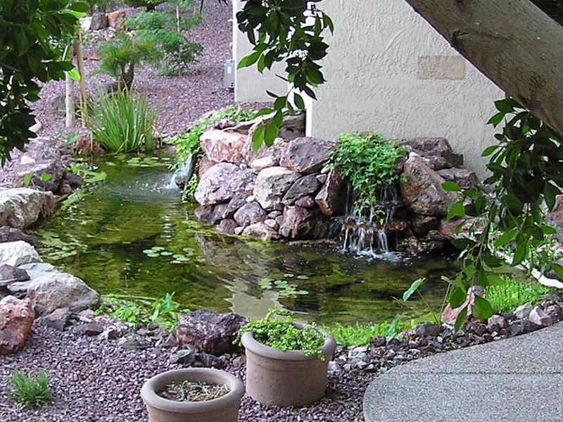 Phoenix office virtual tour koi pond for Virtual koi fish pond